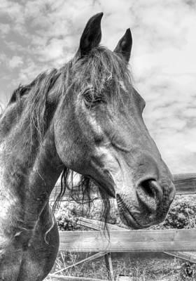 Photograph - Quarter Horse Portrait by Jim Sauchyn