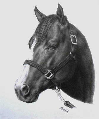 Drawing - Quarter Horse Portrait by Margaret Stockdale