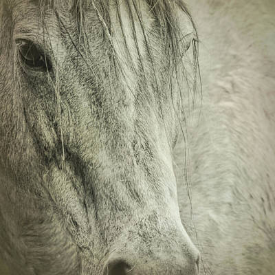 Photograph - Quarter Stud by JAMART Photography