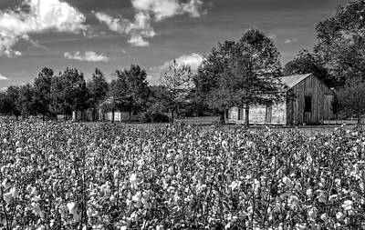Quarters Viewed From Cotton Field At Frogmore Plantation  -  Bw Art Print by Frank J Benz