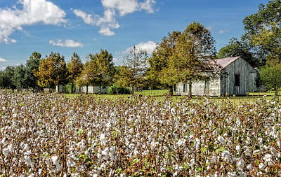 Quarters Viewed From Cotton Field - Frogmore Plantation Art Print by Frank J Benz