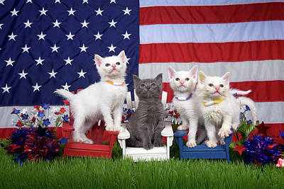 Paws-itively Patriotic Kittens Art Print