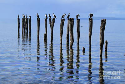 Photograph - Quay Rest by Stephen Mitchell