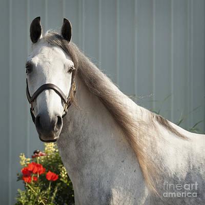 Paso Fino Horse Photograph - Que Pasa? by Carol Lynn Coronios