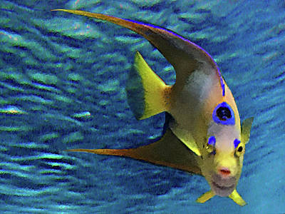 Mixed Media Royalty Free Images - Queen Angel Fish Royalty-Free Image by Steve Karol