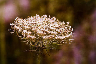Digital Art - Queen Anne's Lace 4 by Gwen Vann-Horn