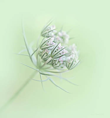 Photograph - Queen Anne's Lace Flower Buds by Jennie Marie Schell