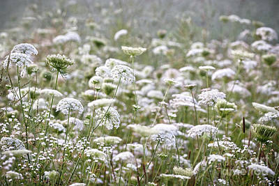 Photograph - Queen Anne's Lace Hazy Summer by Angie Rea