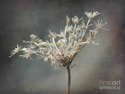 Photograph - Queen Anne's Lace by Kerri Farley