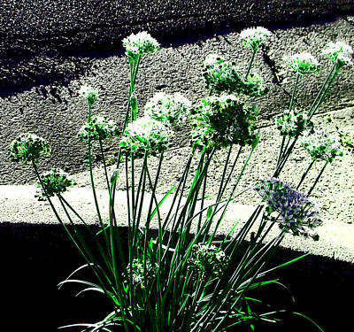 Art Print featuring the photograph Queen Anne's Lace by Lenore Senior