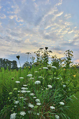Photograph - Queen Anne's Lace Sunrise In Pleasant Valley by Ray Mathis