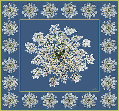 Digital Art - Queen Anne's Lace With Border by Lise Winne