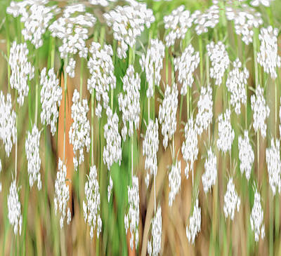 Photograph - Queen Ann's Lace by Tikvah's Hope
