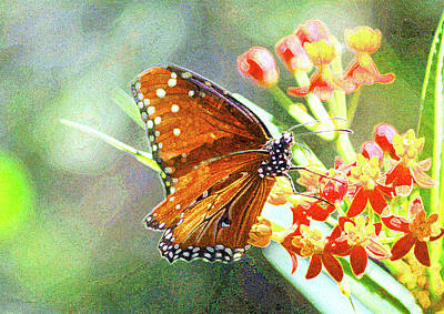Photograph - Queen Butterfly by Inspirational Photo Creations Audrey Taylor