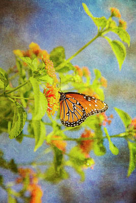 Photograph - Queen Butterfly by Kathy Adams Clark