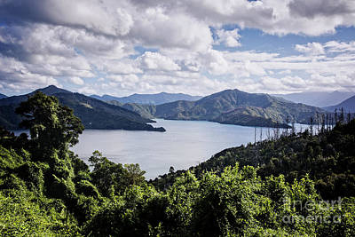 Photograph - Queen Charlotte Sound by Scott Kemper