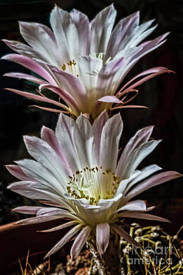 Photograph - Queen Of The Night by Robert Bales