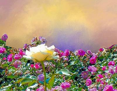 Photograph - Queen Of The Roses by Janette Boyd
