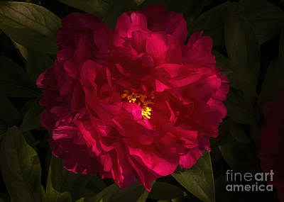 Pittsburgh According To Ron Magnes - Queen Peony by Janice Pariza