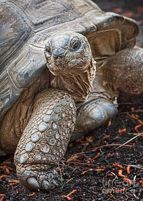 Queen Tortoise Art Print by Jamie Pham