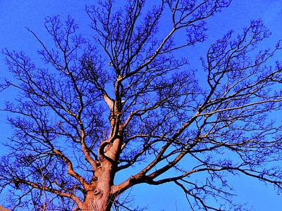 Photograph - Queens Bay Tree by Nik Watt