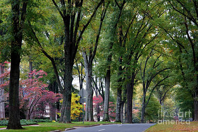 Photograph - Queens Road West In The Fall by Jill Lang
