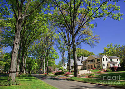 Photograph - Queens Road West In The Spring by Jill Lang