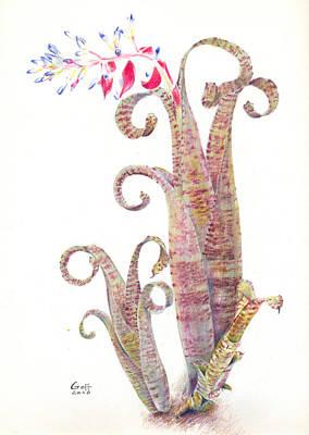 Quesnelia Marmorata Tim Plowman Art Print