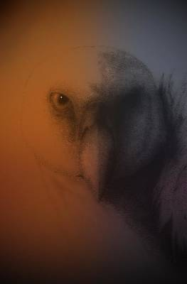 Vulture Mixed Media - Quiet Confidence by Tony Kroll