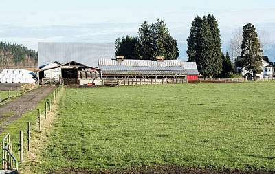 Photograph - Quiet December Skagit Farm by Tom Cochran