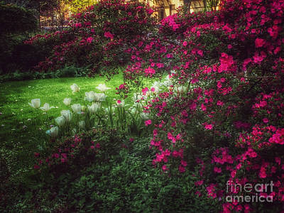 Photograph - Quiet Garden - Evening's Edge by Miriam Danar