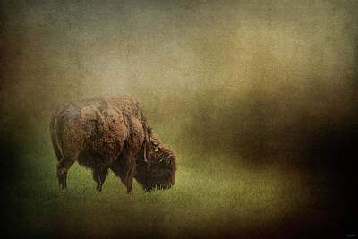 Photograph - Quiet Grazing by Jai Johnson