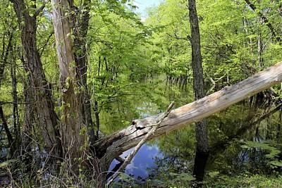 Quiet Marsh Original by Scott Kingery