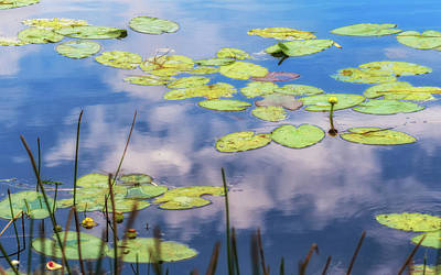 Photograph - Quiet Reflections by Robin Zygelman