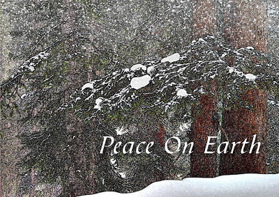 Photograph - Quiet Snow Christmas Card by Roy Kastning