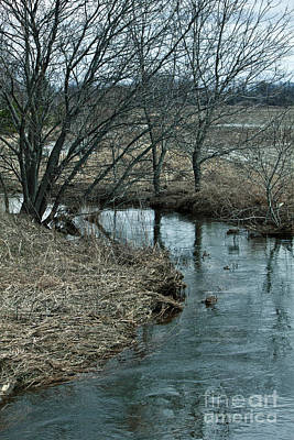 Photograph - Quiet Stream by Donna L Munro