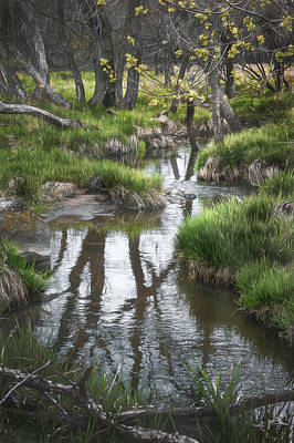 Wetlands Photograph - Quiet Stream by Scott Norris