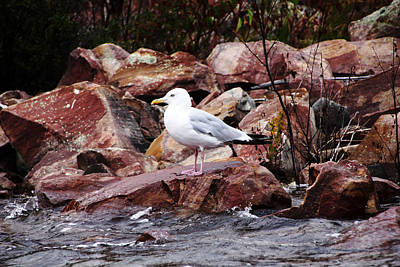 Photograph - Quiet Time by Debbie Oppermann