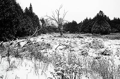 Photograph - Quiet Winter Black And White by Debbie Oppermann