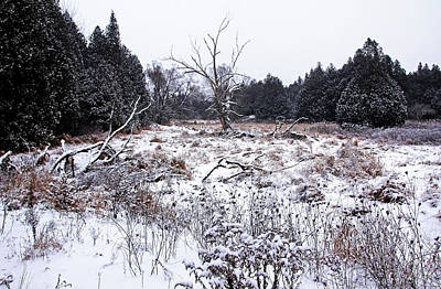 Photograph - Quiet Winter by Debbie Oppermann