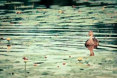 Photograph - Quietude by Aimelle