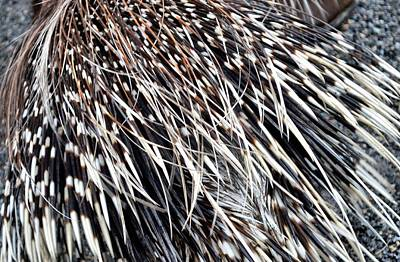 Photograph - Quills by JAMART Photography