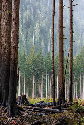 Vintage Movie Stars - Quinault Rainforest 20 by Mike Penney
