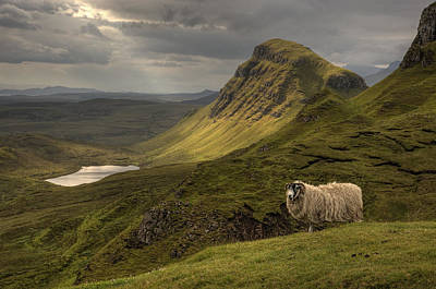 Quiraing Sheep Art Print by Wade Aiken