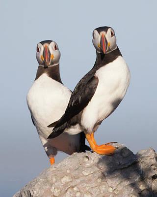 Photograph - Quite A Couple by Paul Treseler