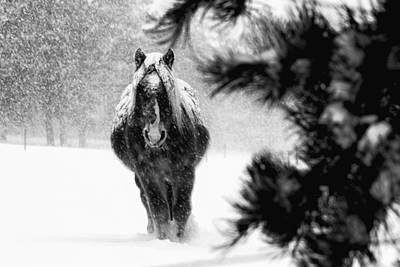 Gallop Photograph - Quitet Moments by Mark Courage