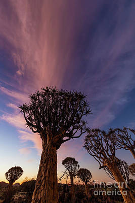 Photograph - Quiver Trees 14 by Inge Johnsson