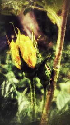 Yellow Rosebud Photograph - Quixote by Isabella F Abbie Shores