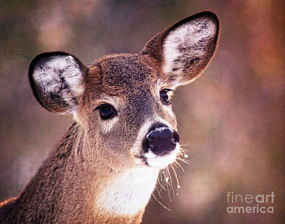 Photograph - Quizitive Doe by Scott Kemper