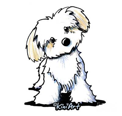 Drawing - Quizzical Havanese Poster by Kim Niles